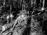 Chokesetters and logs on hillside, unidentified logging company, ca. 1913