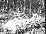 Four men posed with large logs, Snohomish County, ca. 1913