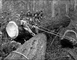 Crew yarding logs with a choker, Snohomish County, ca. 1913