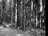Scenic Highway through the Cascades, ca. 1925