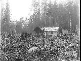 Log cabin with shake roof and woman on porch, Snohomish County, ca. 1911