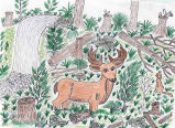 Drawing of a deer in a logged forest, ca. 2004