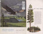 Annual report / Weyerhaeuser Timber Company 1951