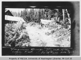 Wagon trail at Longmire, Mount Rainier, May 1903