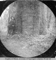 Man standing next to a spruce tree, Hoh River area, May 5, 1893