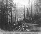 Unfinished road in woods, vicinity of Mount Rainier, 1909