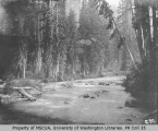 Vistors at a forested section of the Paradise River, ca. 1901