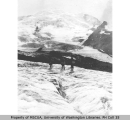 White Glacier, west slope of Mount Rainier,  July 22, 1910