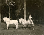 Circus horses and trainer, from the Norris and Rowe Circus