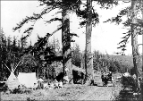 Camping in West Seattle, ca. 1905