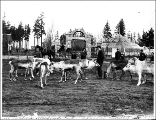 Reindeer with entrance to Woodland Park in background, Seattle, 1898