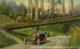 Automobile and fallen tree across road, Woodland Park, n.d.