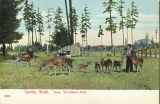 Deer at Woodland Park Zoological Gardens, 1907