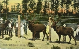 Elk enclosure at Woodland Park, 1911