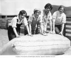 Four sheep shearing girls wearing overalls rolling a wool sack, possibly Washington, ca. 1929-1932