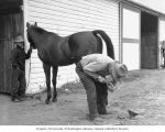 Man shoeing a horse in front of a stable while a second man holds the horse's reins, Washington...