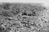 Dead German soldier in field, World War I, ca. 1916