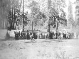 Mazama Club members in front of tents in forest on an outing to Mount Rainier, 1902