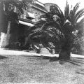 Chase home from front lawn at Stags Leap, Napa, California, n.d.