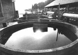 Bluestone vats filled with copper sulfite at Clifton near defunct cannery, 1979-1980