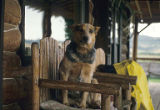 Dog sitting on chair on porch, Box R Ranch, Wyoming, 1987