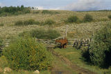 Horse near fence, Box R Ranch, Wyoming, 1987