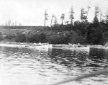 YMCA boy's camp on Orcas island showing boys rowing dinghies near wooded shoreline, 1910