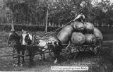 Man sitting on giant potatoes on horse-drawn cart, 1908