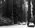 Cars on the road surrounded by the forest in Weber Grove, July 1966