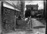 Loyal's cats in a basket, n.d.