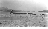 U.S. mail carrier and dog sled team arriving at Seward, ca. 1912