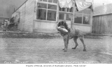 Dog with loaf of bread in its mouth on city street, Seward, ca. 1910