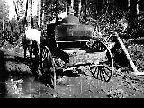 Horse and wagon on muddy road, Mount Rainier National Park, 1912