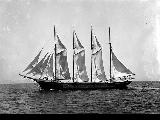 ALEX T. BROWN,  schooner in full sail, n.d.
