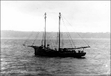Sailing vessel EDITH, n.d.
