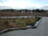 North Creek, wetland boardwalk, and floodplain following heavy autumn rains
