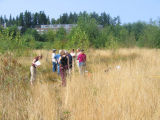 Elementary school teachers learning vegetation sampling techniques in wetlands