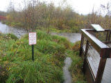 Floodplain,  North Creek north of boardwalk, and the boardwalk after heavy autumn rains