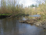 Remnants of beaver dam across North Creek channel