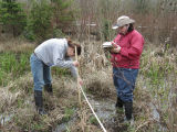 Measuring floodplain vegetation along a transect south of the boardwalk