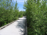 Boardwalk and floodplain vegetation in spring