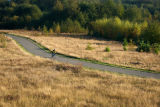 Bicyclist on bike trail through wetland buffer