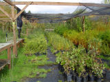 Cold frame plant storage area