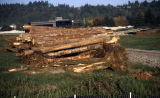 Trees harvested from upper campus stacked for use as woody debris in wetlands restoration