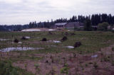 Wetlands during restoration, new floodplain with microdepressions and hummocks made from woody...