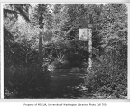 Drug Plant Garden (now Medicinal Herb Garden), University of Washington, n.d.