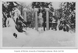 Columns in snow, University of Washington, February 1916