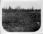 Cleared field on the site of the University of Washington campus, 1894