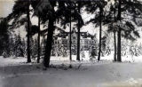 Denny Hall surrounded by snow-covered trees, University of Washington, circa 1905
