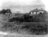 Harvesting grain with O. S. Van Olinda's house in background, East Coupeville, n.d.